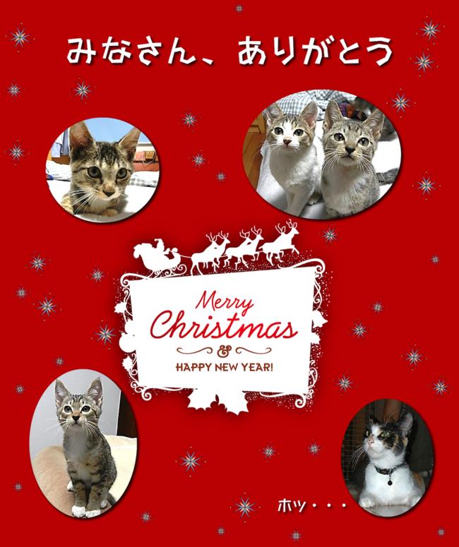 Satooyacats