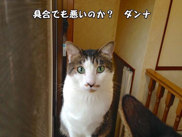 Aki02