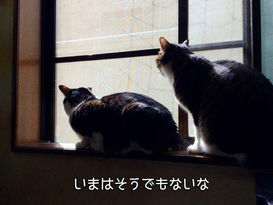 IMG_4218-